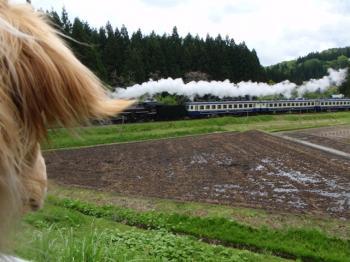 機関車だぁ♪♪