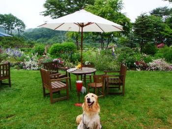 こんな素敵なお庭で・・・