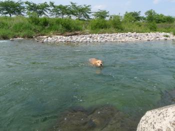泳いで・・・