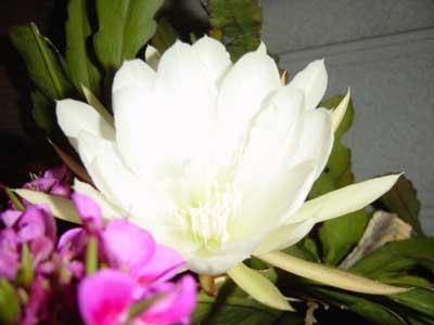 20070526-1.jpg