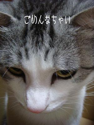 20071229-4.jpg