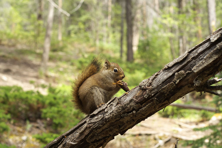 the host Squirrel
