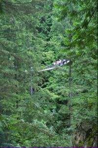 Lynn Canyon Suspention Bridge