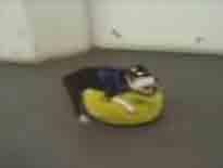 051016_ピカチュウと犬