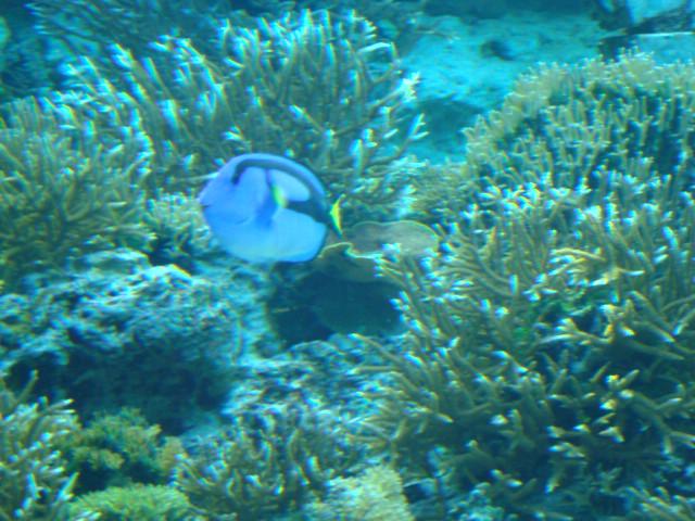 さんご礁のお魚