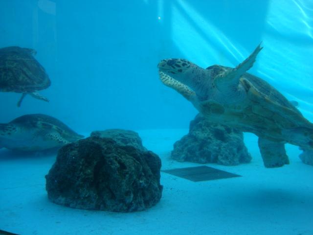 海亀だらけ