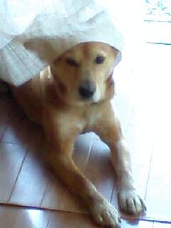 NAN-DOG2.jpg