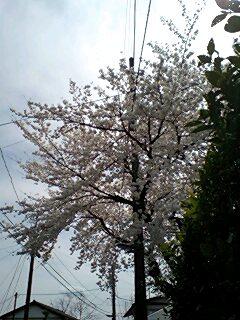 sakuramichi0003.jpg