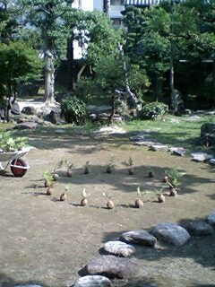 shumokukan-garden2.jpg