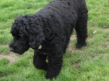 黒犬060820