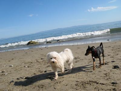 beach0806258