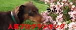 バナーお花ニコ