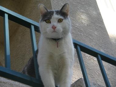 cat1070105