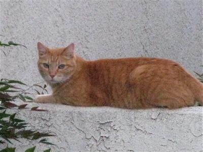 cat0810085
