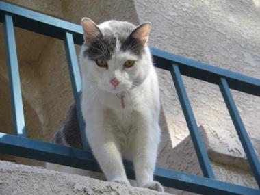 cat2070105