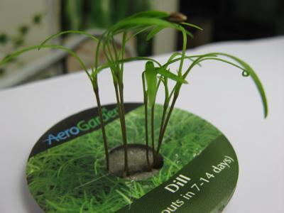 herb0803262