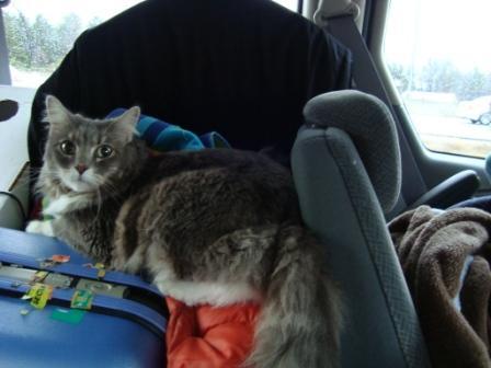 kitty trip