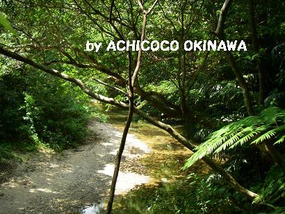 ahijio38.jpg