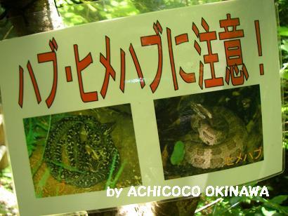 ahijio43.jpg