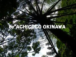 ahijio44.jpg