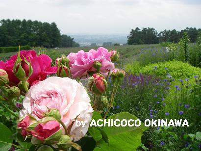 ashinshuu11.jpg