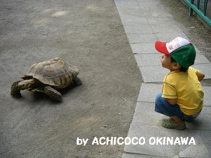 ashinshuu81.jpg