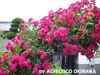 ashinshuu83.jpg