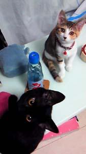 ミウとハナ