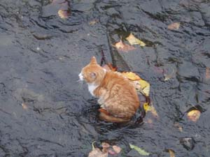 川猫アップ