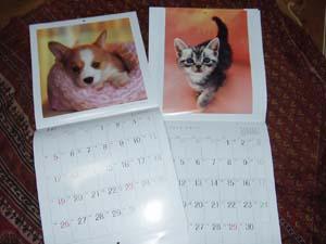 犬猫カレンダー2010