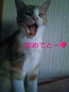 夢子0106