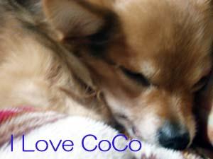 CoCo0101-2.jpg