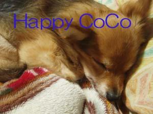 CoCo0101.jpg