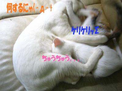 20060408154328.jpg