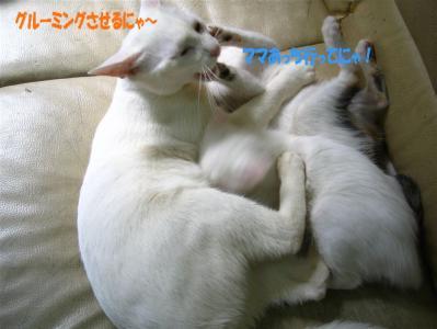 20060408154814.jpg