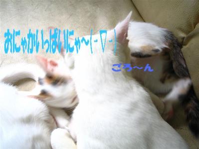 20060408160105.jpg