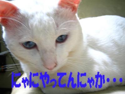 20060408160526.jpg