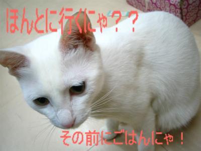 20060415134945.jpg