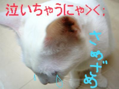 20060415135256.jpg