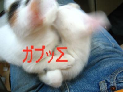 20060417200659.jpg