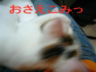 20060417200819.jpg