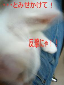 20060418071531.jpg