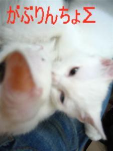 20060418071941.jpg
