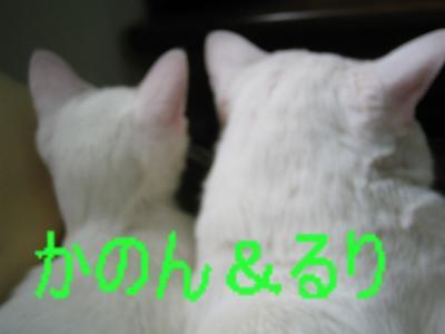 20060524190034.jpg
