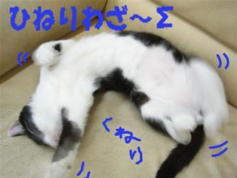 ひねりっこ~