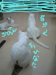 座りかけるり(^m^;