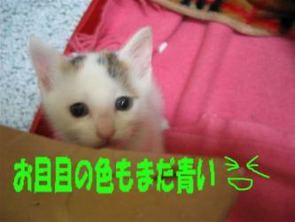お目目も青い☆