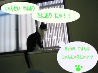 20060926132759.jpg