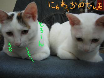 20060930180519.jpg