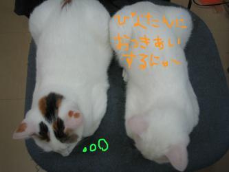 20060930180551.jpg
